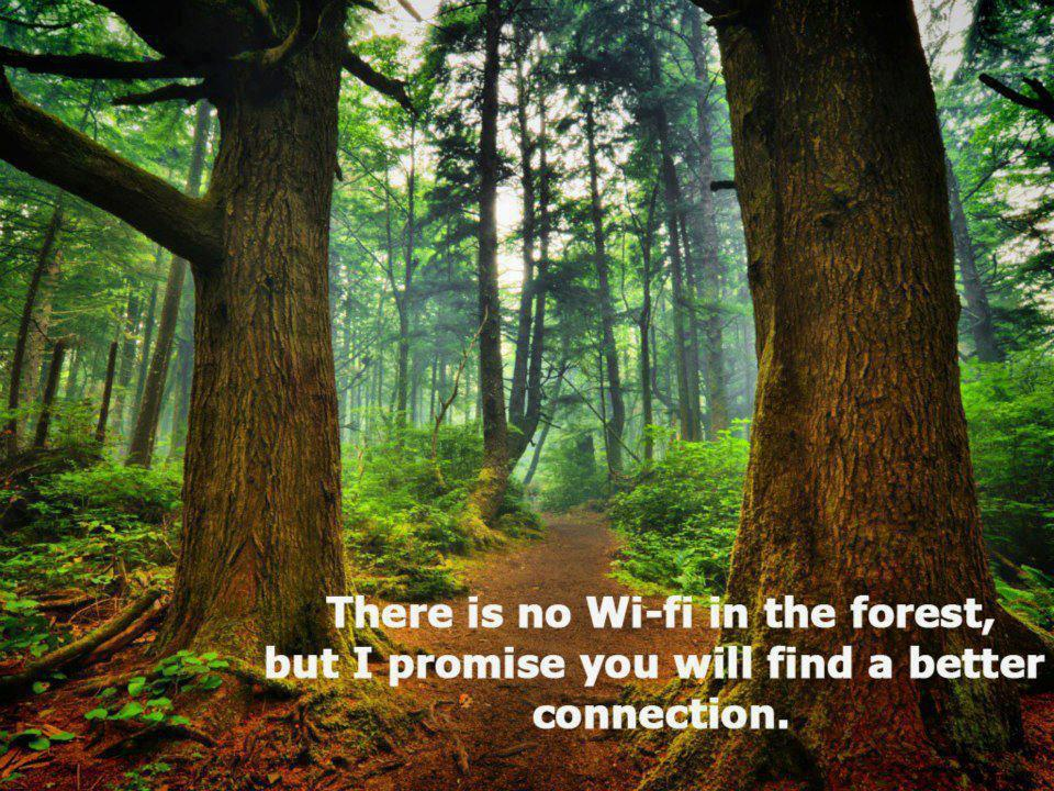 forest connection